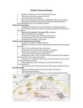 Facharbeit über zelluläre Hormonwirkung - Das Hormonsystem
